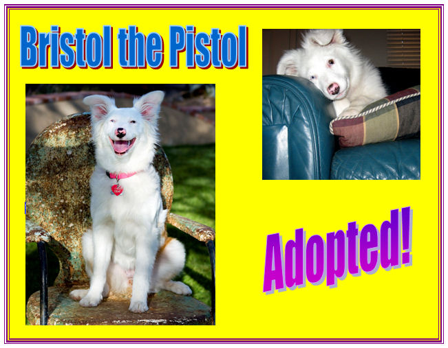 Bristol has been adopted