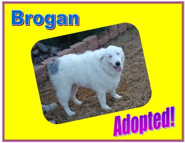 Brogan adopted