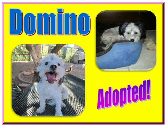 Domino Adopted