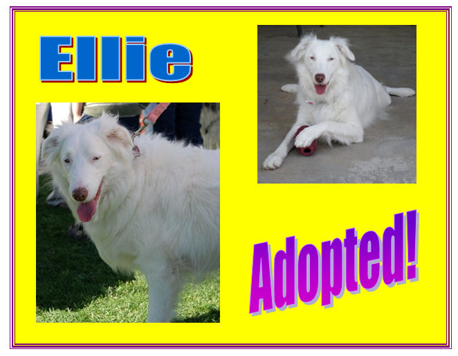 Ellie adopted