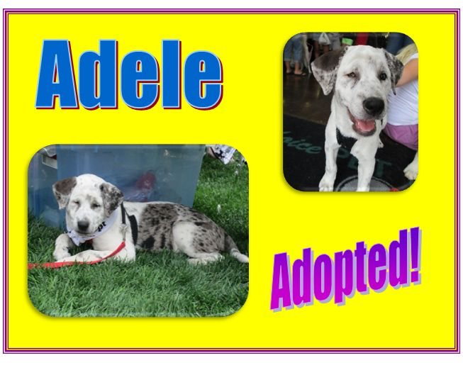 adele adopted