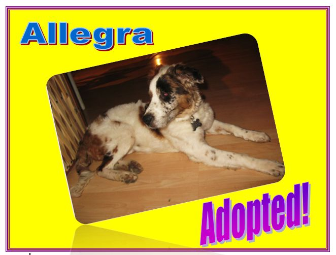 allegra adopted
