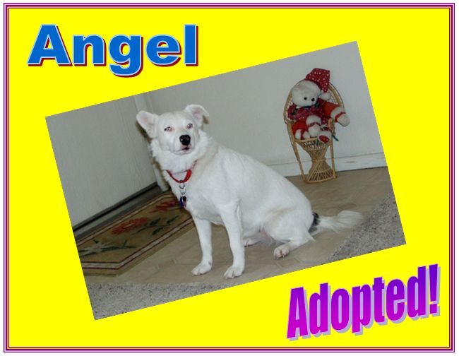 angel adopted