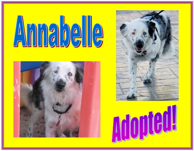 annabelle adopted