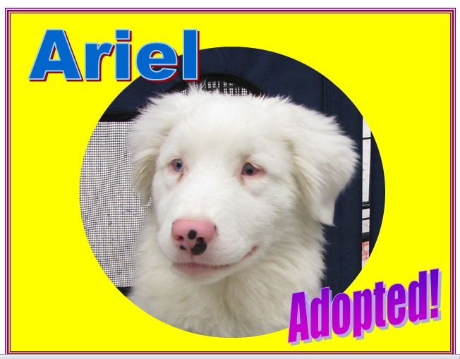ariel adopted
