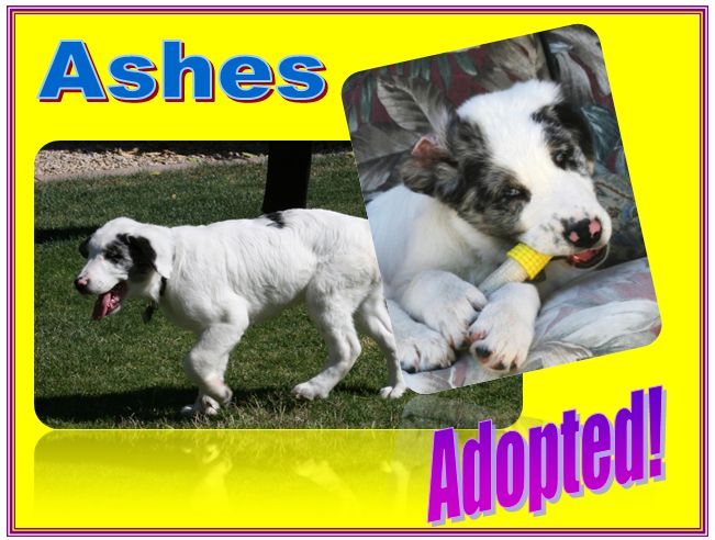 ashes adopted