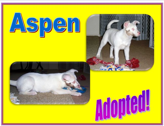 aspen adopted