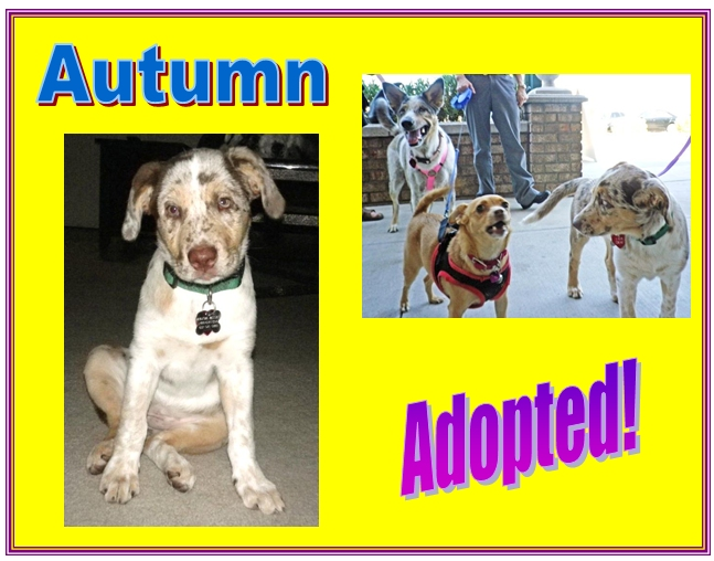autumn adopted