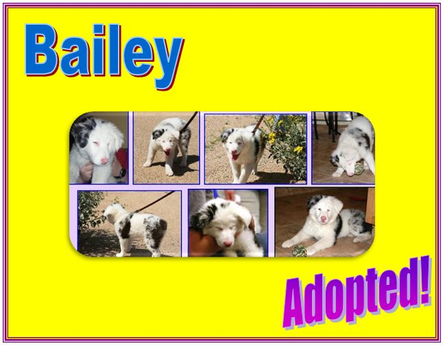 bailey adopted
