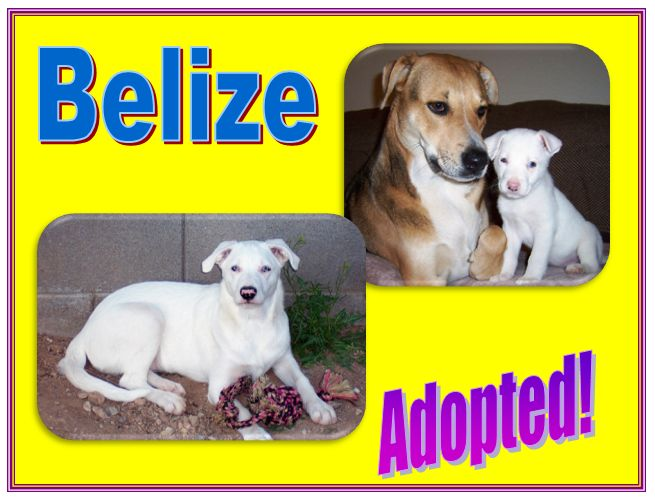 belize adopted