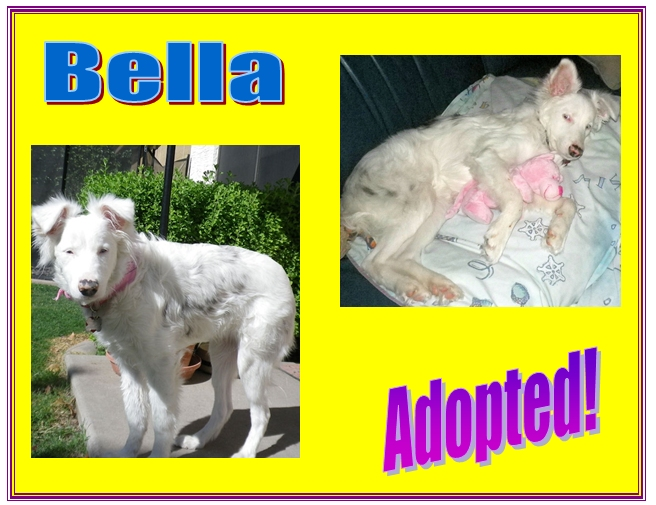 bella adopted