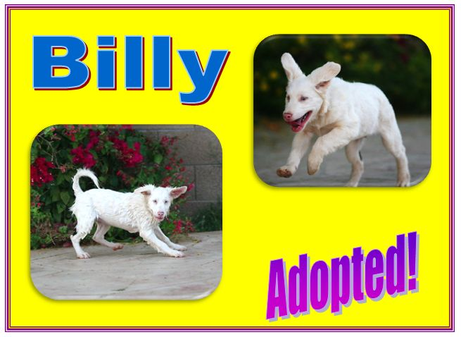 billy adopted