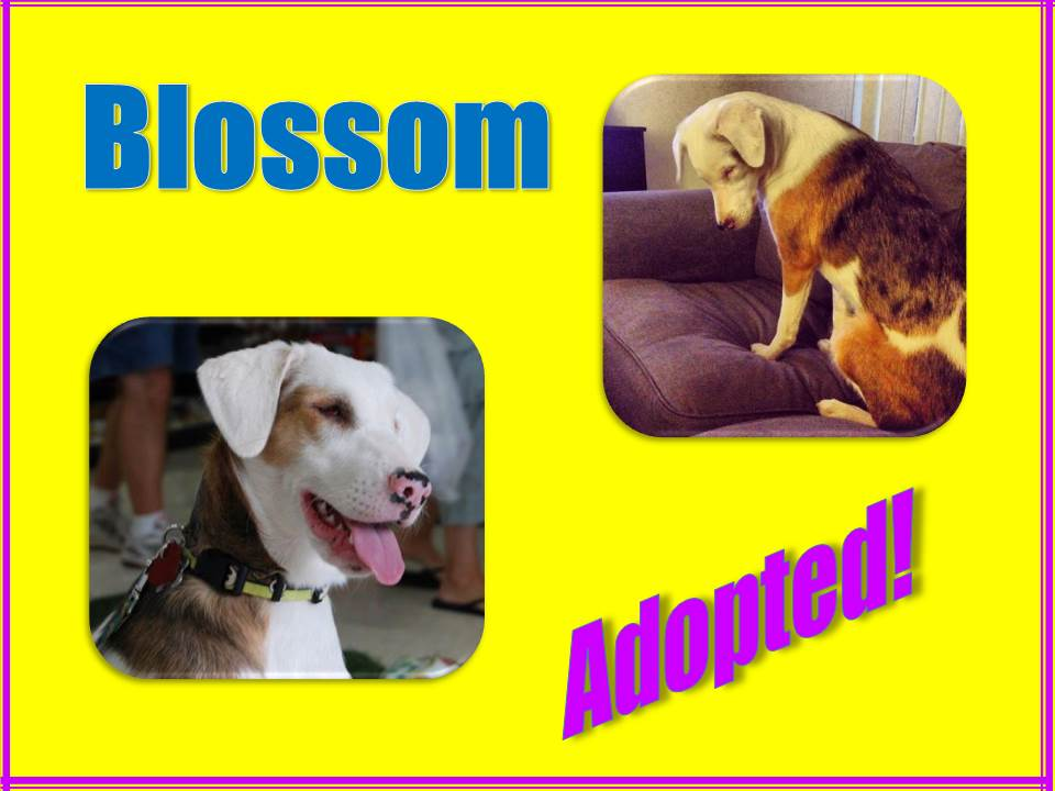 blossom adopted