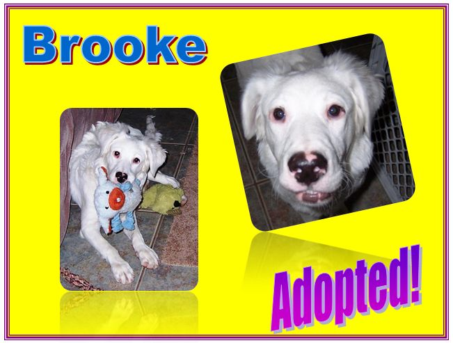 brooke adopted