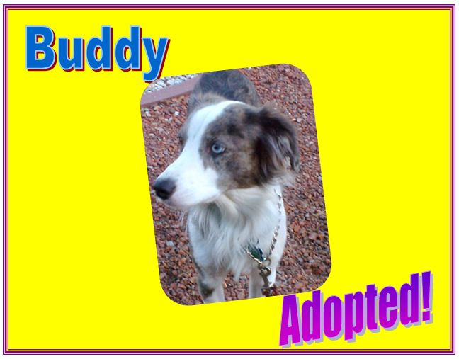 buddy adopted