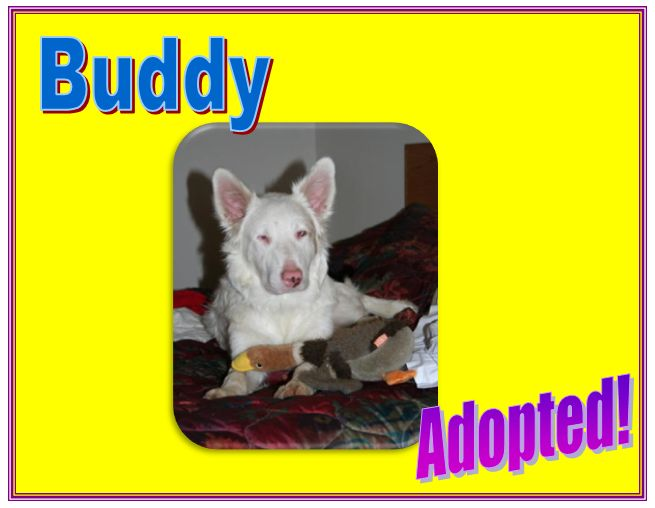 buddy white adopted