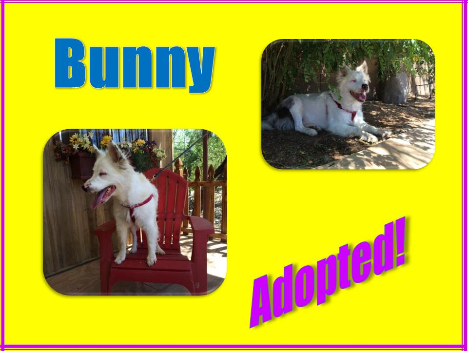 bunny adopted