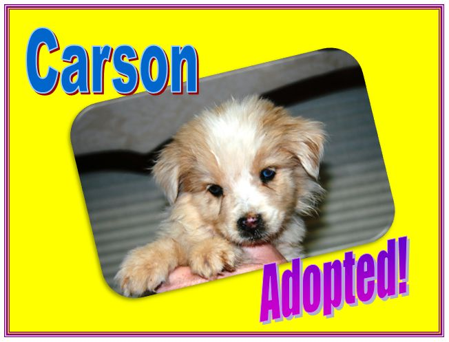 carson adopted