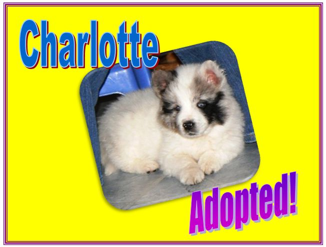 charlotte adopted