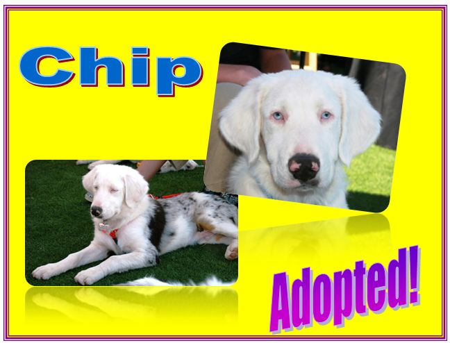 chip adopted