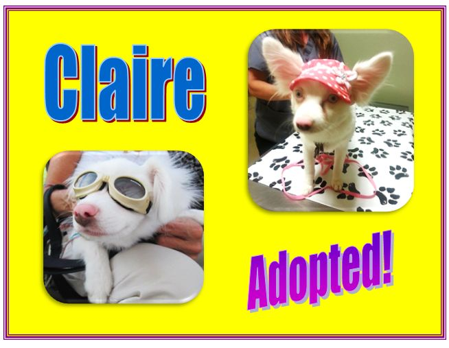 claire adopted