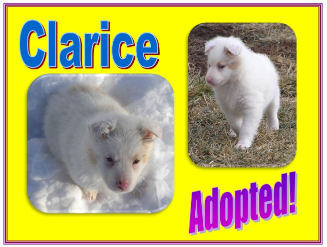 clarice adopted