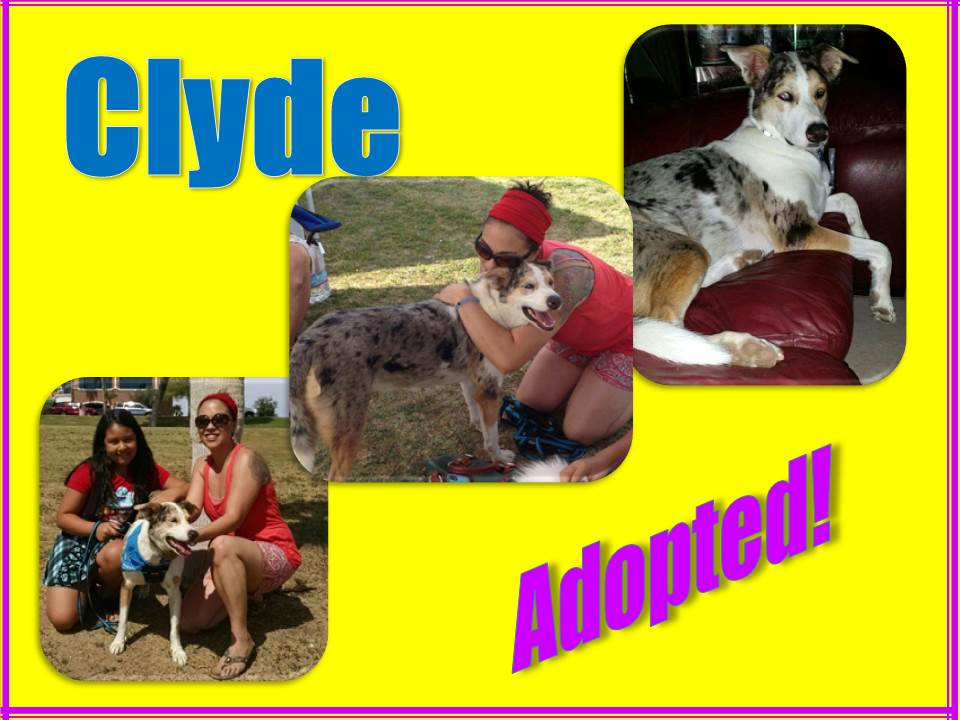 clyde adopted