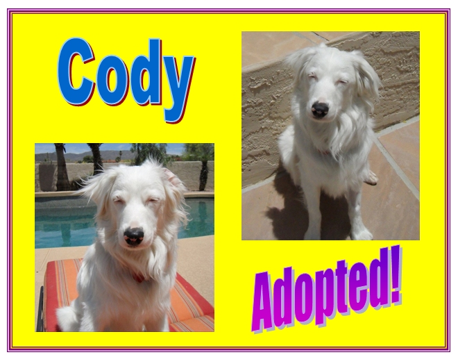 cody adopted