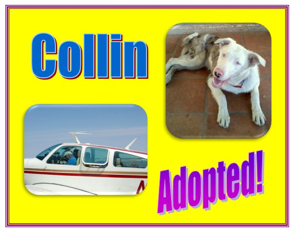 collin adopted