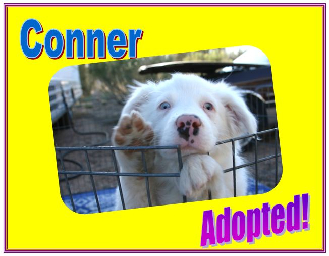 conner adopted
