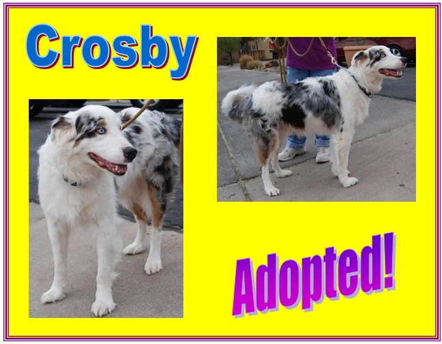 crosby adopted