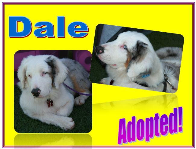 dale adopted