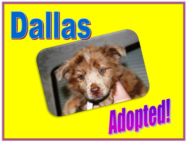 dallas adopted
