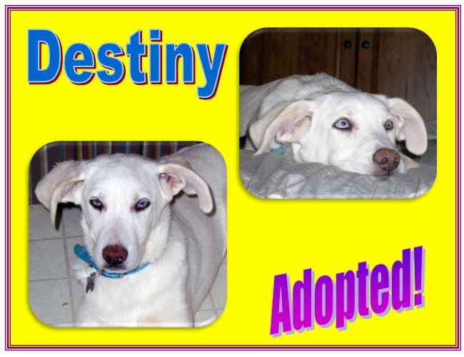 destiny adopted