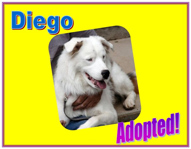 diego adopted