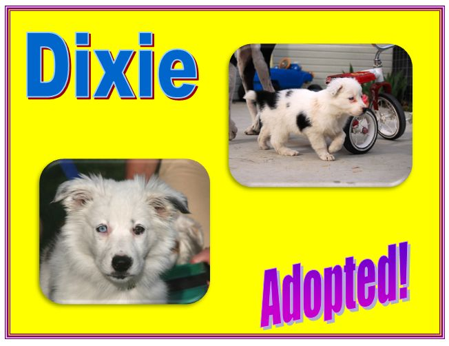 dixie adopted
