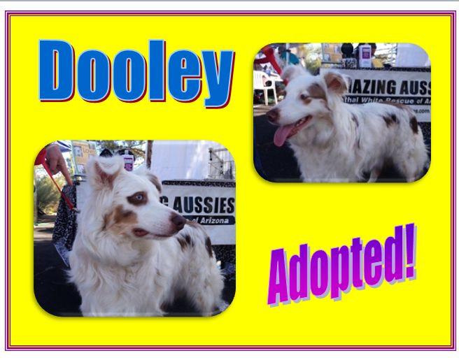 dooley adopted