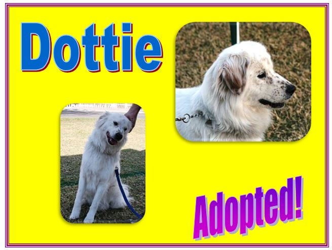 dottie adopted