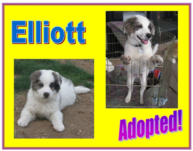 elliott adopted