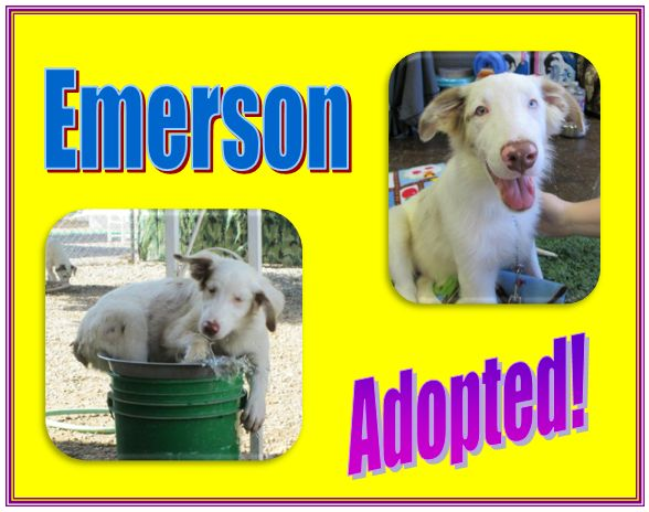 emerson adopted