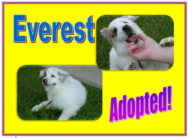 everest adopted