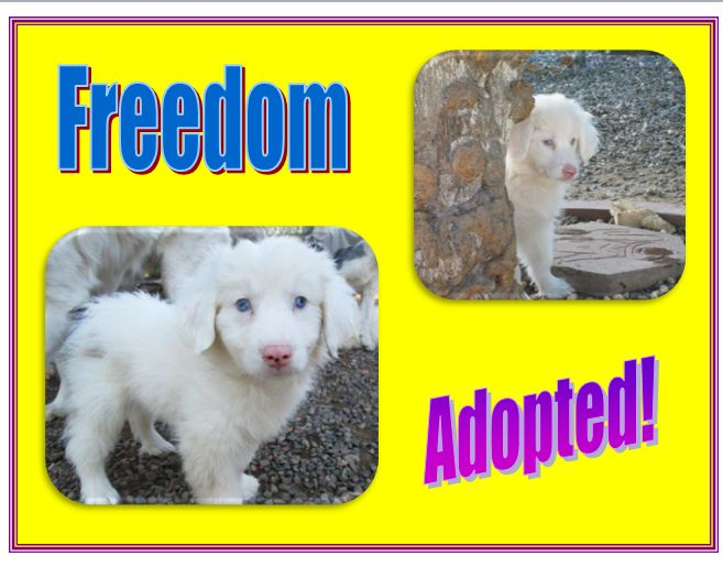 freedom adopted