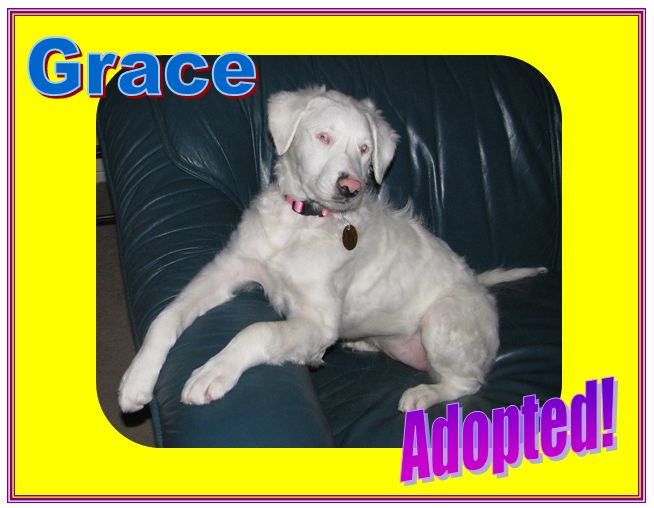 grace adopted