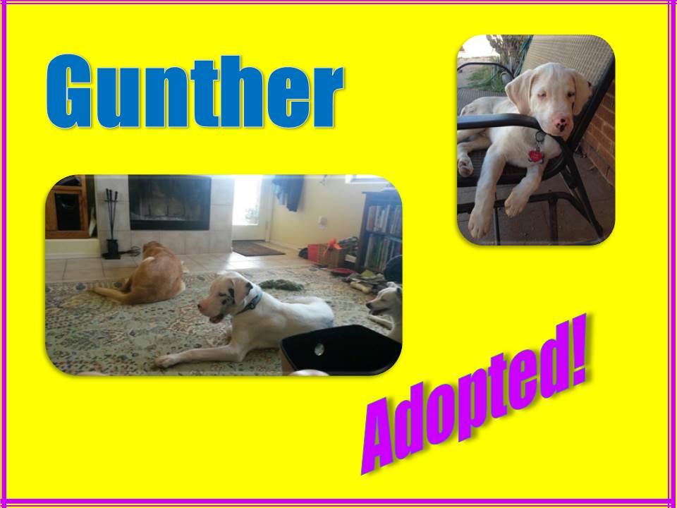 gunther adopted