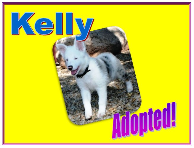 kelly adopted