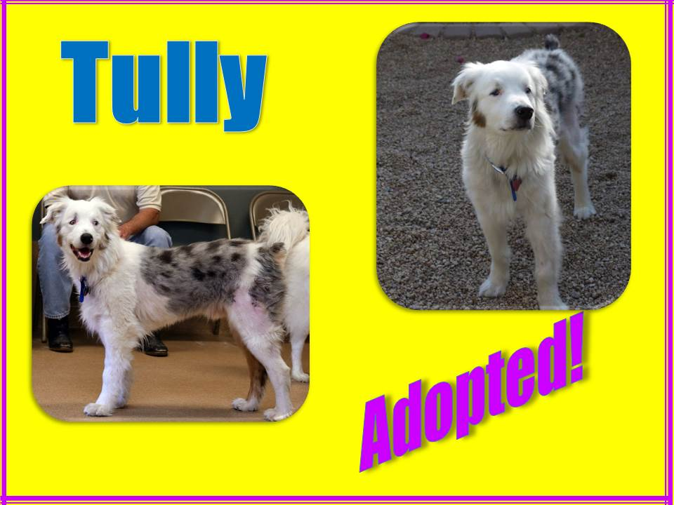 tully adopted